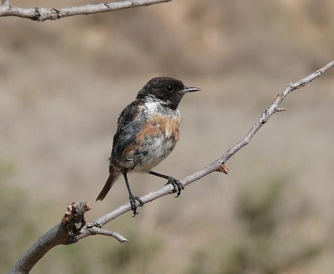 Aquest diumenge, 24 de febrer, es farà el taller Els ocells del parc es preparen per fer el niu al parc del Torrent de la Font i del Turó de l'Enric de Badalona