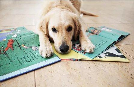 Taller de lectura assistida amb gos