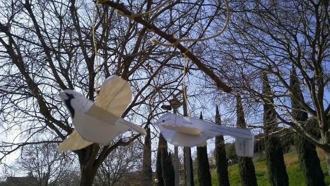 Activitats programades per aquest diumenge, 10 de novembre, als parcs de Can Solei i Ca l'Arnús i del Torrent de la Font i del Turó de l'Enric de Badalona