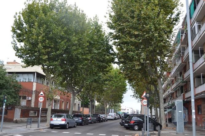 L'Ajuntament de Badalona fumigarà a partir d'avui els plataners i els oms dels barris de Sant Roc, Artigues, el Remei, el Congrés, Gorg i Llefià