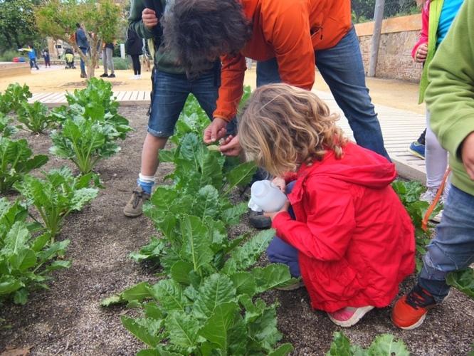 Activitats programades als parcs de Can Solei i Ca l'Arnús i del Torrent de la Font i del Turó de l'Enric de Badalona per aquest diumenge 3 de novembre