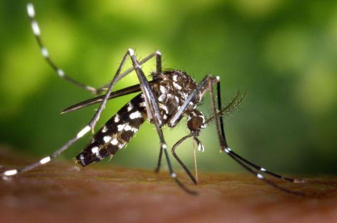 L'Ajuntament de Badalona posa en marxa la campanya de prevenció del mosquit tigre